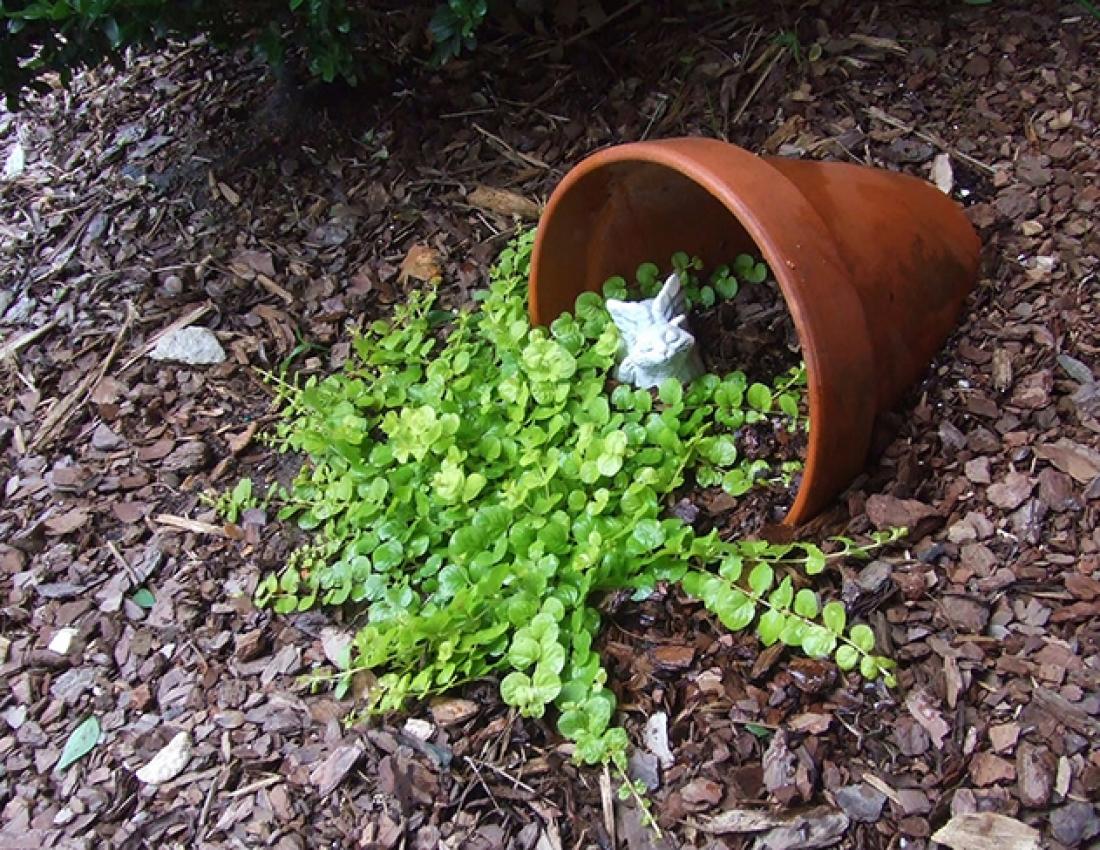 Как украсить огород своими руками из подручных материалов фото